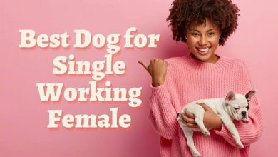 Photo of Best Dog for Single Working Female: Breeds for Women Living Alone